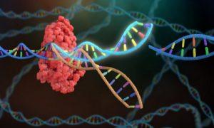 جهش ژنتیکی و ابتلا به سرطان